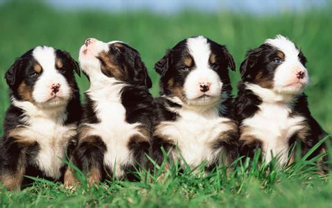 狗狗的一些基本特征,你都知道吗