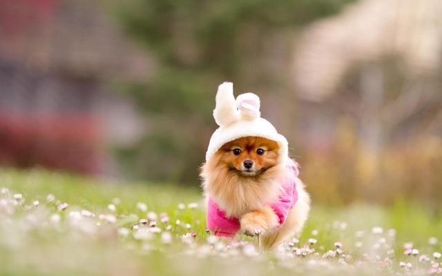 关于狗狗的基本常识你都知道吗